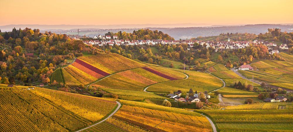 uitzicht over de wijngaarden in stuttgart
